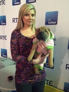 dog expert ireland