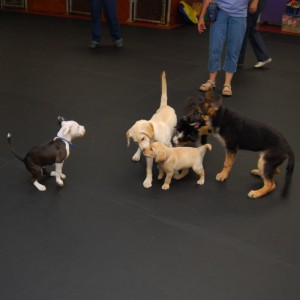 puppy socialisation classes cork